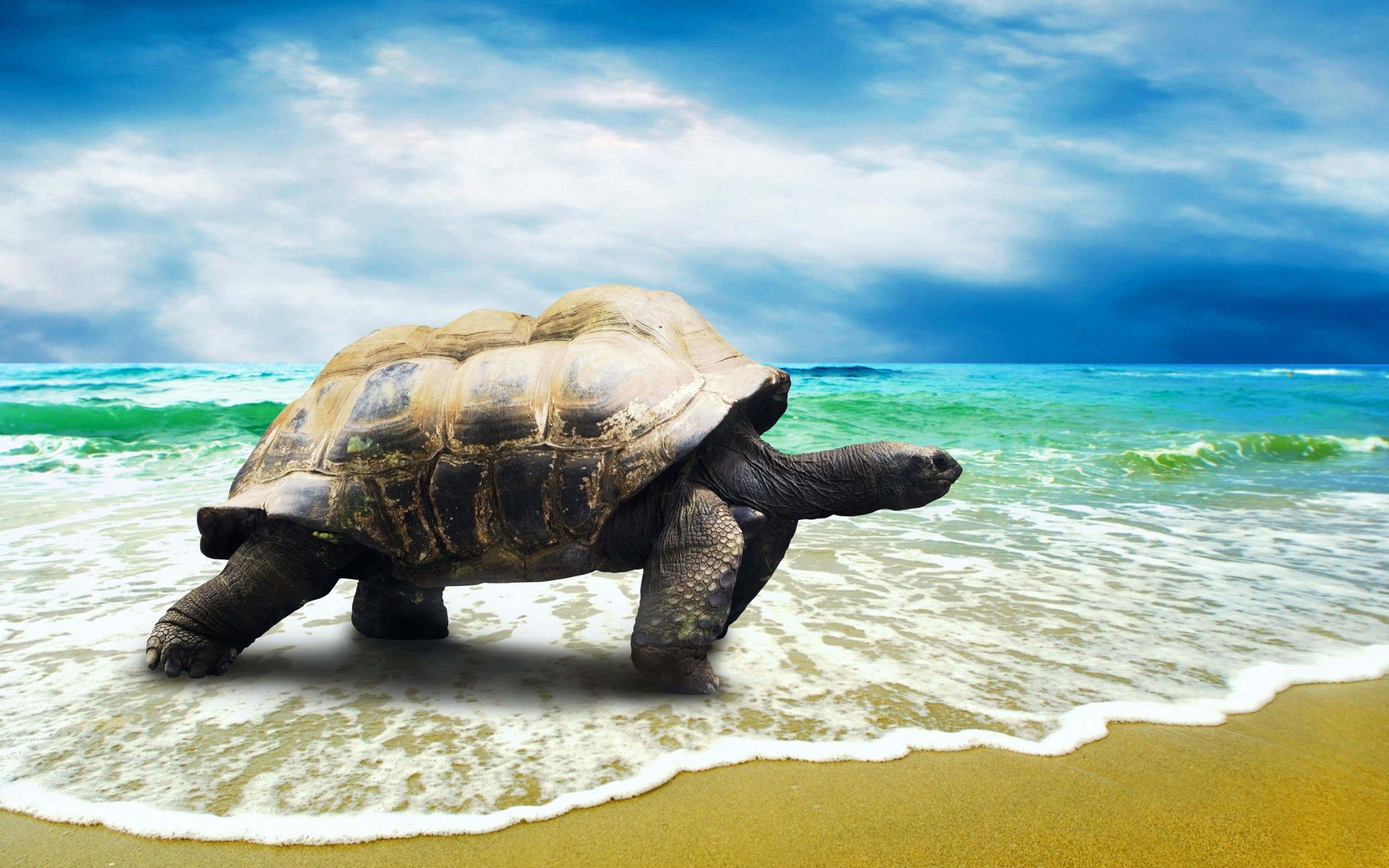 イメージ動物sea_turtle_walking_on_the_beach_sand-wide